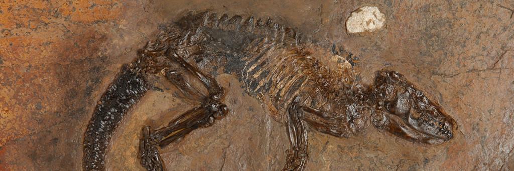 En fossil med en ödla